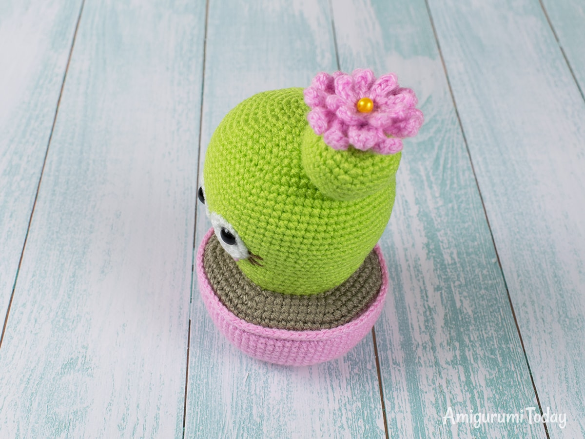 Blooming Cactus Amigurumi Pattern by Amigurumi Today